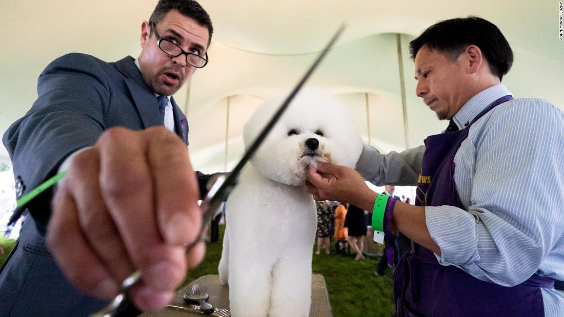 In photos: The 145th Westminster Kennel Club Dog Show