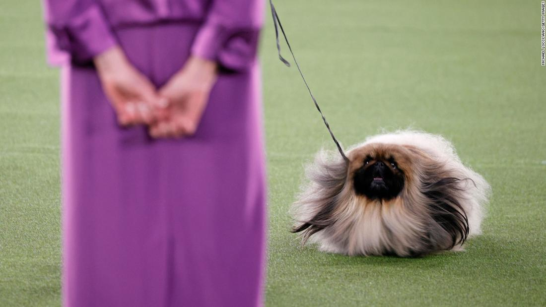 See winning dog handler's reaction to 'Best in Show' clip