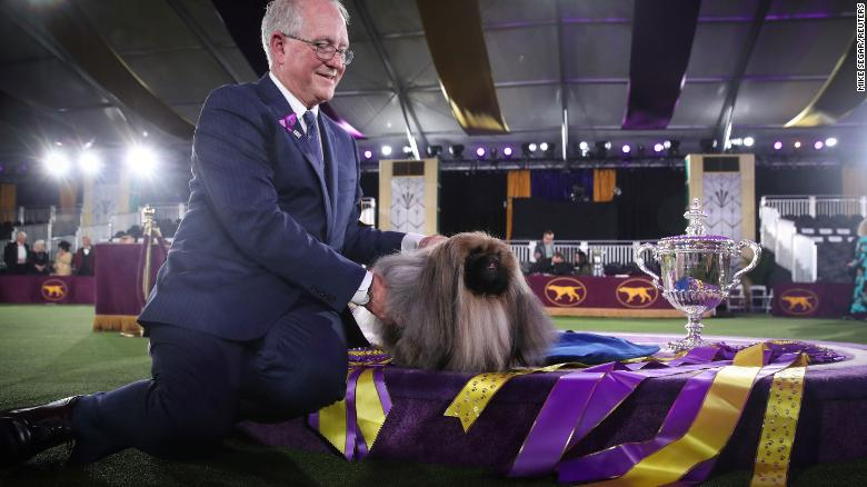 Behind the scenes at the Westminster Dog Show