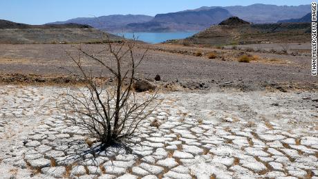 Озеро Мид видно вдалеке за мертвым кустом креозота в области сухой потрескавшейся земли, которая была под водой, недалеко от того места, где когда-то стояла якорная стоянка озера Мид.