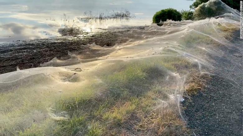 Australian region covered in cobwebs as spiders flee floods