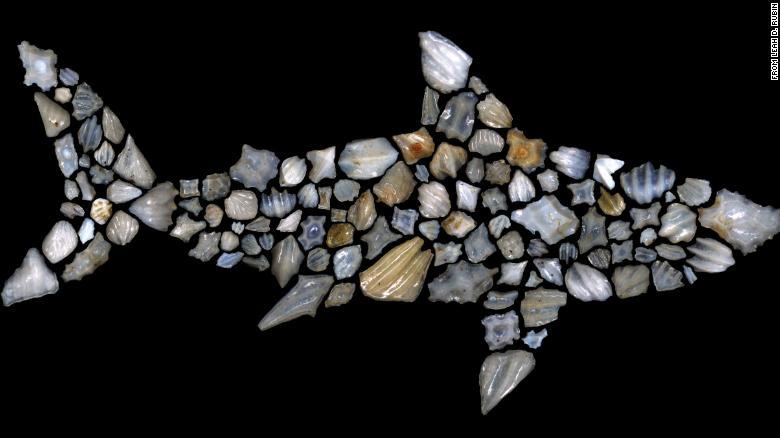 Siluet hiu ini terdiri dari fosil hiu
