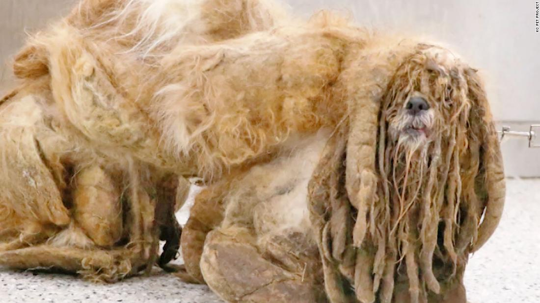 Believe it or not, there's a stray dog under this mess of hair - CNN Video