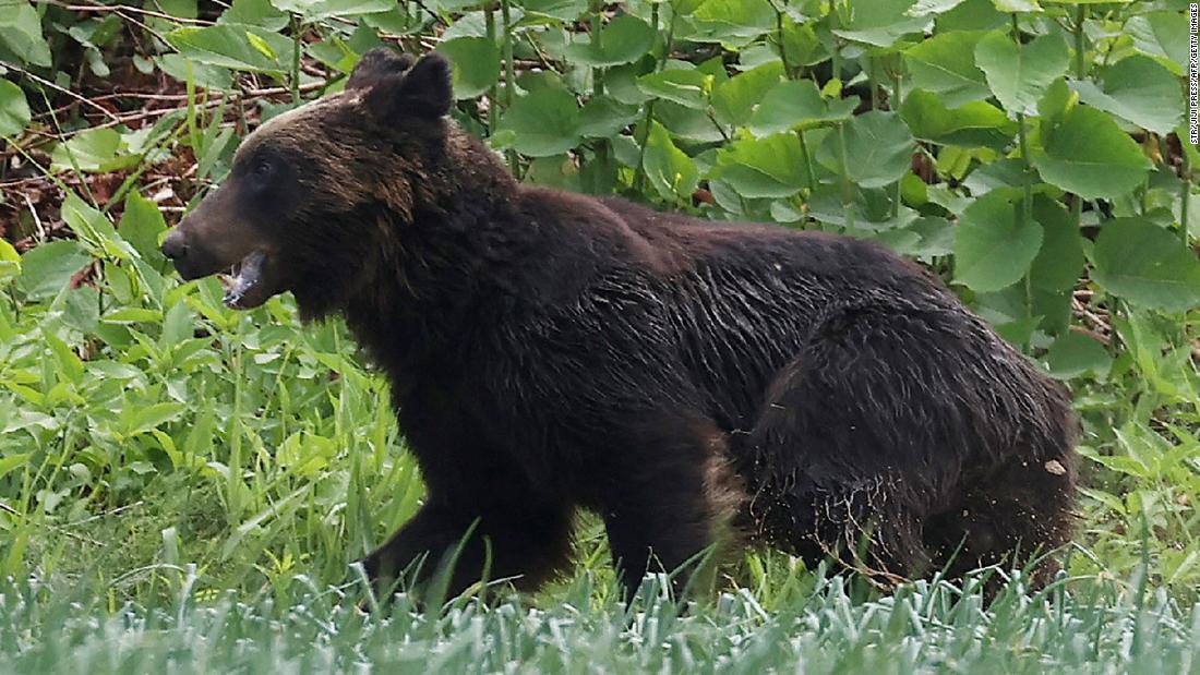 210618033145 01 bear attack japan super tease