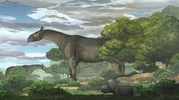 The Linxia Giant Rhino is a new species.