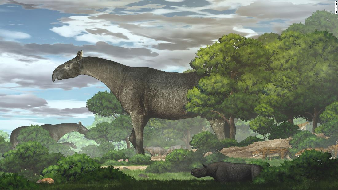 This giant prehistoric rhino was the biggest land mammal to walk the Earth – CNN
