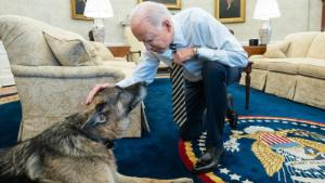 President Joe Biden pets the Biden family dog Champ in the Oval Office of the White House Wednesday, Feb. 24, 2021, prior to a bipartisan meeting with House and Senate members to discuss supply chains. (Official White House Photo by Adam Schultz)
