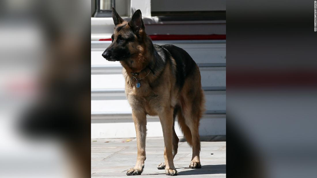 The Bidens' dog Champ has died