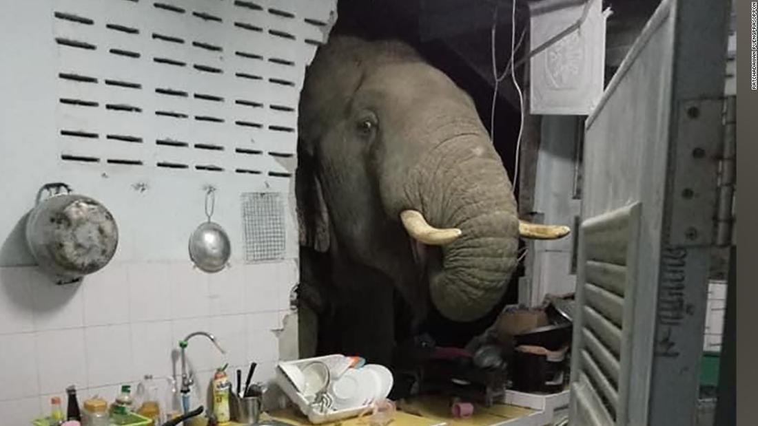 210622123102 thailand elephant kitchen super tease