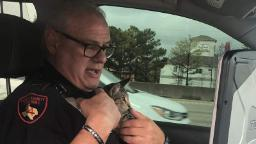 Kitten thrown onto freeway now has a chance for a better life