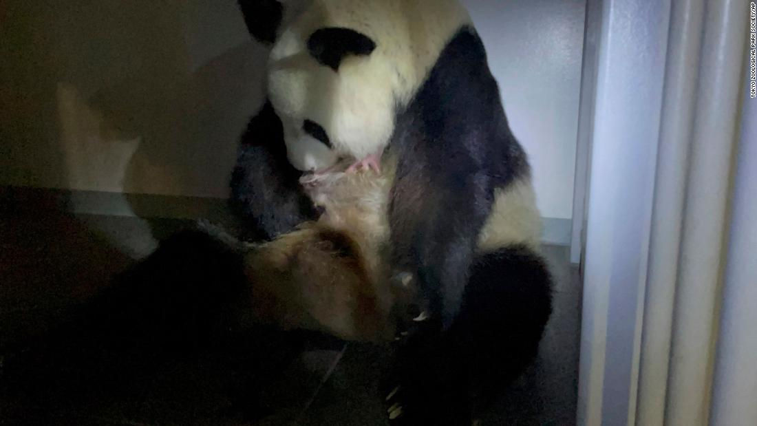 Giant panda gives birth to twin cubs at Tokyo's Ueno Zoo