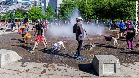 People and pets cool off at a spray park in Portland.