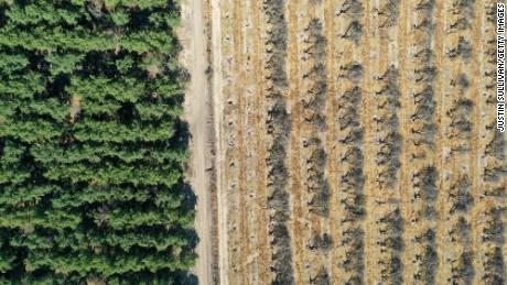 Rows of almond trees sit on the ground during an orchard removal project on May 27, 2021 in Snelling, California. As the drought emergency takes hold in California, some farmers are having to remove crops that require excessive watering due to a shortage of water in the Central Valley.