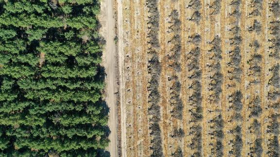 This aerial photo shows rows of almond trees sitting on the ground during an orchard removal project in Snelling, California, on May 27. Because of a shortage of water in the Central Valley, some farmers are having to remove crops that require excessive watering.