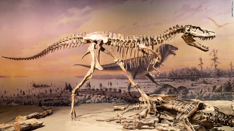 Dinosaurs were already struggling before the asteroid strike that doomed them to extinction, study finds