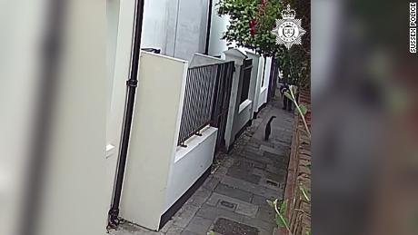 Hendrix, qui est photographiée en train de fuir l'agresseur, a été poignardée avec un couteau et s'est enfuie chez elle.  Le chat est décédé plus tard de ses blessures.