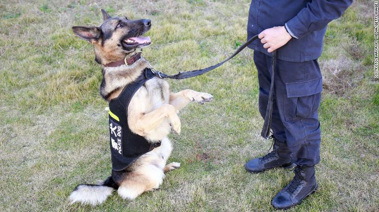 Chinese police asks public to adopt 'timid' dogs who failed training