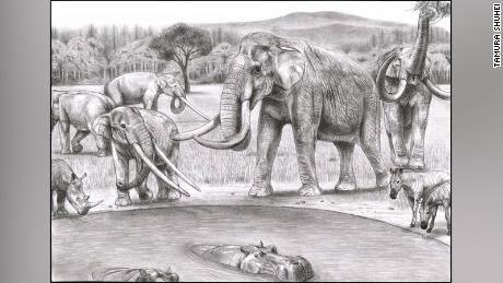 Αυτή η εικόνα απεικονίζει τη βόρεια Ιταλία πριν από δύο εκατομμύρια χρόνια.  Το πρωτόγονο νότιο μαμούθ, Mammuthus meridionalis (δεξιά), μοιράστηκε την τρύπα του ποτίσματος με την τάξη mastodont Anancus arvernensis (αριστερά).