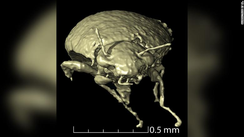 Scientists find previously undiscovered species hidden in fossilized poop
