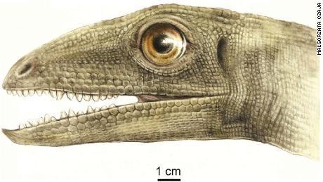На фото - художественная реконструкция Celsaurus opulensis.