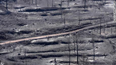 Burned trees are seen on Troodos mountain, in Ora village, southwestern Cyprus, Sunday, July 4.