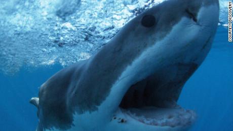 Большая белая акула появляется в сцене из фильма «Открытие».  s & quot;  Поделиться неделей.  & quot;