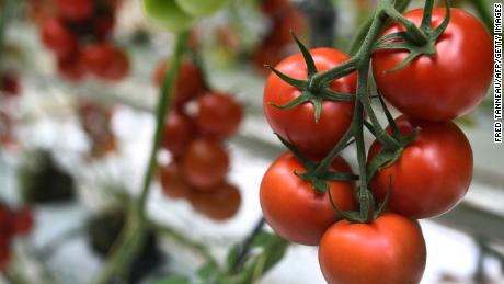 Tomatoes are the perfect no-cook food for a heat wave