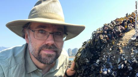 Extreme heat cooked mussels, clams and other shellfish alive on beaches in Western Canada