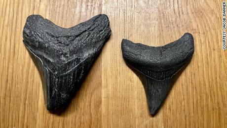 Jacob Danner found two megalodon teeth within a period of three weeks.