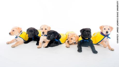 Jardim de infância para filhotes do Centro de Cognição Canina da Duke University para a aula da Primavera de 2020 & quot ;; para tirar uma foto.