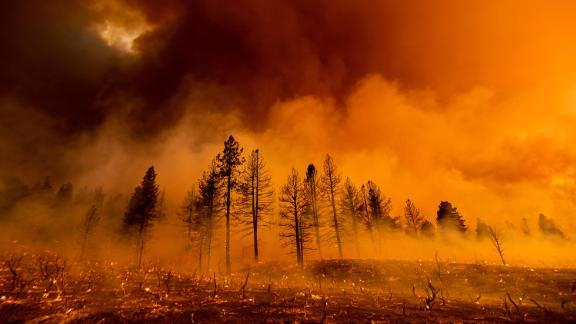 Smoke envelops trees as the Sugar Fire, part of the Beckwourth Complex Fire, burns in Doyle, California, on July 9.