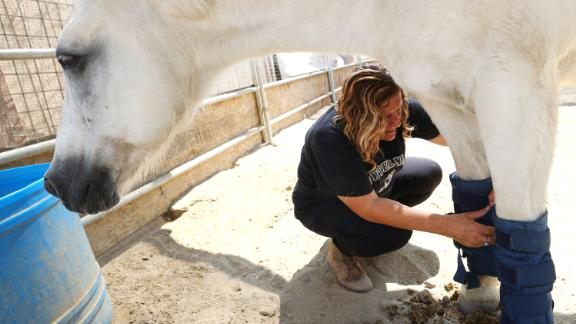 Annette Garcia, director of the Coachella Valley Horse Rescue, straps ice packs onto a horse's legs to help keep him cool amid a water shortage in Indio, California.