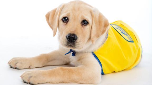 Incontra Wisdom, un membro della classe Primavera 2020 presso il Centre for Dog Cognition Puppy Kindergarten della Duke University.