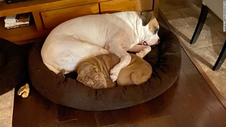 Los dos perros de Morton, Darla y Louis.