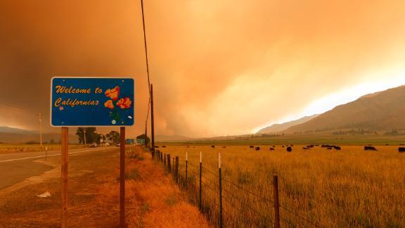 Cattle graze as the Tamarack Fire burns in Markleeville, California, on July 17.