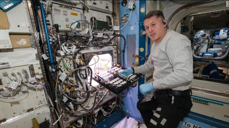Astronauts on International Space Station are growing chile peppers in a first for NASA