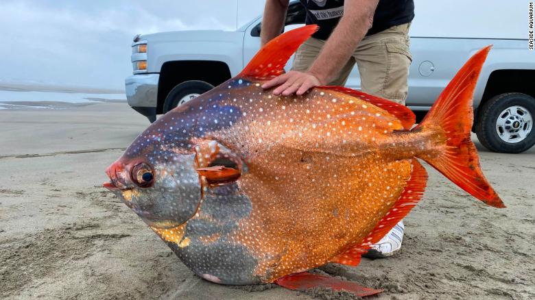 100-pound tropical fish discovered on a beach in Oregon