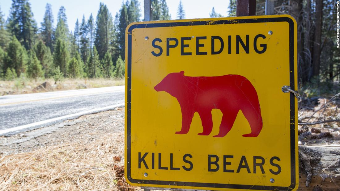 Yosemite park ranger shares heartbreaking plea to visitors to slow down after a bear cub was killed by a car