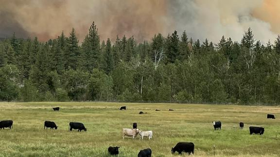 Devere Dressler and Valerie Gordon were checking on their neighbors' cows when the Tamarack Fire came up the hill behind the pasture.