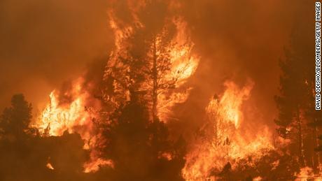17 जुलै रोजी कॅलिफोर्नियाच्या मार्कलीविले येथे तामारॅक आगीच्या वेळी हायवे 89 जवळ झाडे जाळली गेली.