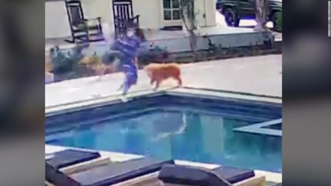 'Real Housewife' walks into a beehive and jumps in pool to escape them
