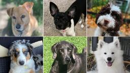 Rover promises a network of 'trusted sitters and dog walkers.' That wasn't enough to save these pets