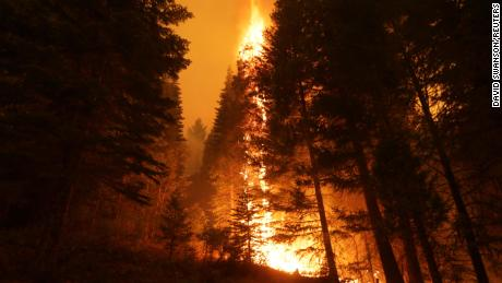 Dixie Fire burns the trees near Taylorsville, California, on July 29, 2021.