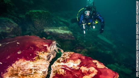 A diver is spotted observing the purple, white and green microbes covering rocks in the Sinkhole of the Middle Island of Lake Huron.