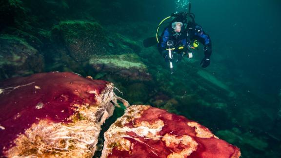 Un plongeur sous-marin observe les microbes violets, blancs et verts recouvrant les roches dans un trou sur l'île centrale du lac Huron.