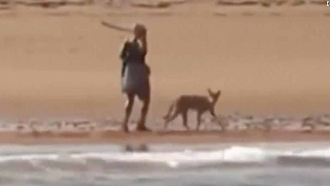 Woman cornered on beach by coyote, fights it off with stick