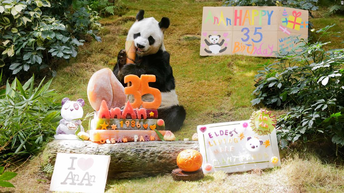 World's oldest zoo panda turns 35