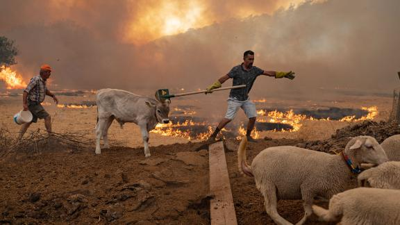A man keeps his cattle away from an advancing blaze on August 2 in Mugla, Marmaris district, as the European Union sends aid to Turkey and volunteers join firefighters in the days violent fires.