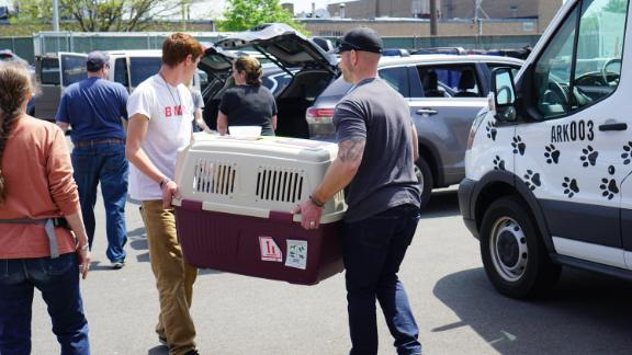 Dog rescue groups want the CDC to reopen dog imports to those who can properly document that the dogs are vaccinated against and immune to rabies.