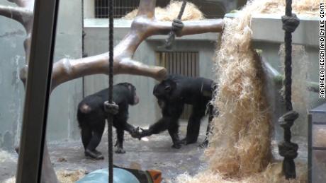 apen & # 39 ;  De woorden hallo en vaarwel geven aan dat dieren onderlinge afspraken en gemeenschappelijke verplichtingen met elkaar kunnen communiceren.